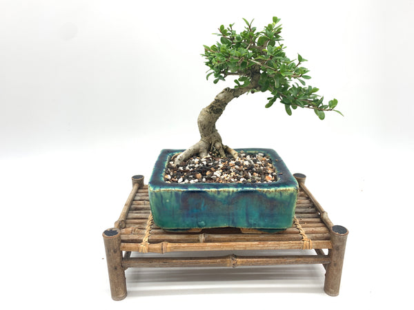 Shohin Bonsai Soil Mix
