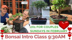 Bonsai Party (Introductory Class) (February 18)