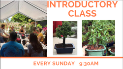 Bonsai Party (Introductory Class) (December 24)