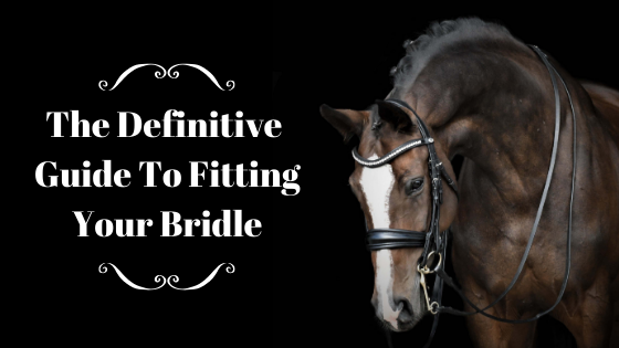 How To Measure Your Horse For A New Solo Bridle