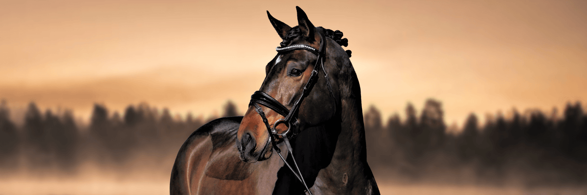 Solo Equine Anatomical Dressage Bridle with bling and soft padded leather.