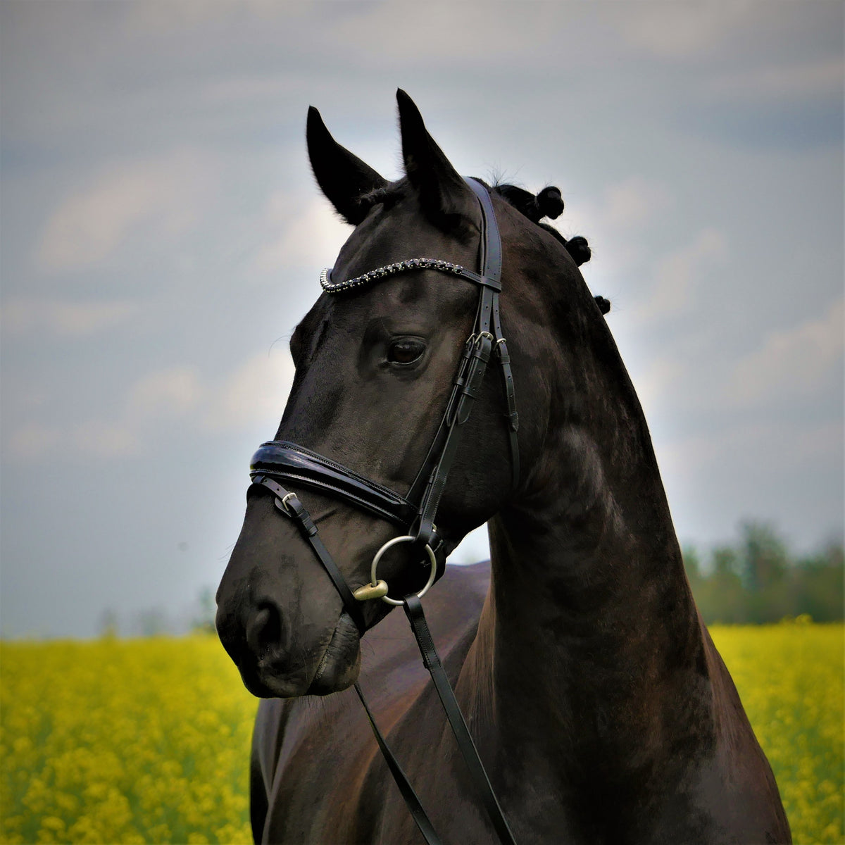 Solo Sion black dressage bridle with bling browband. Anatomical patent noseband.