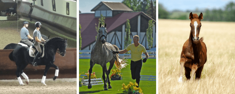 About Us – SoloEquine
