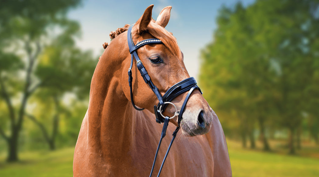 Anatomical Dressage Bridles – SoloEquine