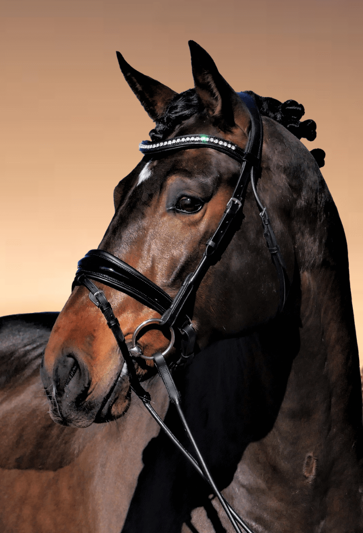 dressage bridle with anatomical crown and soft padding with bling