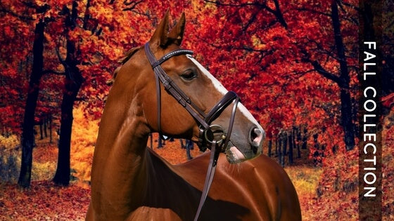 Fall Swag – SoloEquine