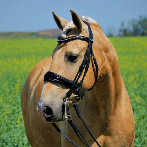 Image of Solo ShowBiz - Dressage Double Bridle. Dressage Bridle in Patent black with anatomical shape. Bling browband.