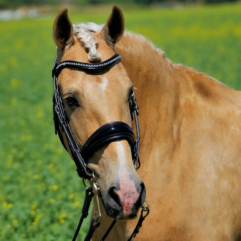 Solo ShowBiz - Dressage Double Bridle. Dressage Bridle in Patent black with anatomical shape. Bling browband.