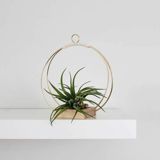 Plant Hanger - Small