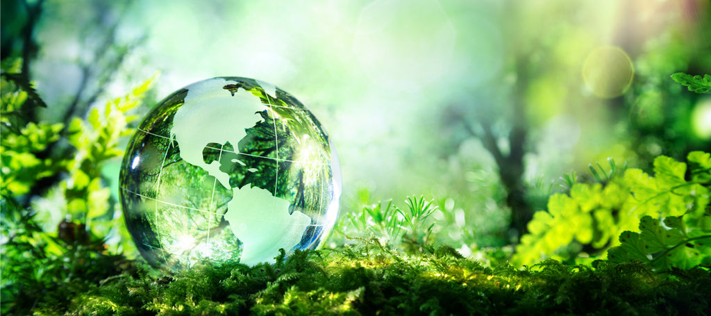 Halal Living and Supporting Sustainability - 20 Ways Muslims Can Protect the Environment