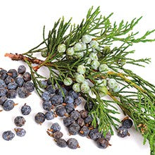 Nepalese Cypress essential oil