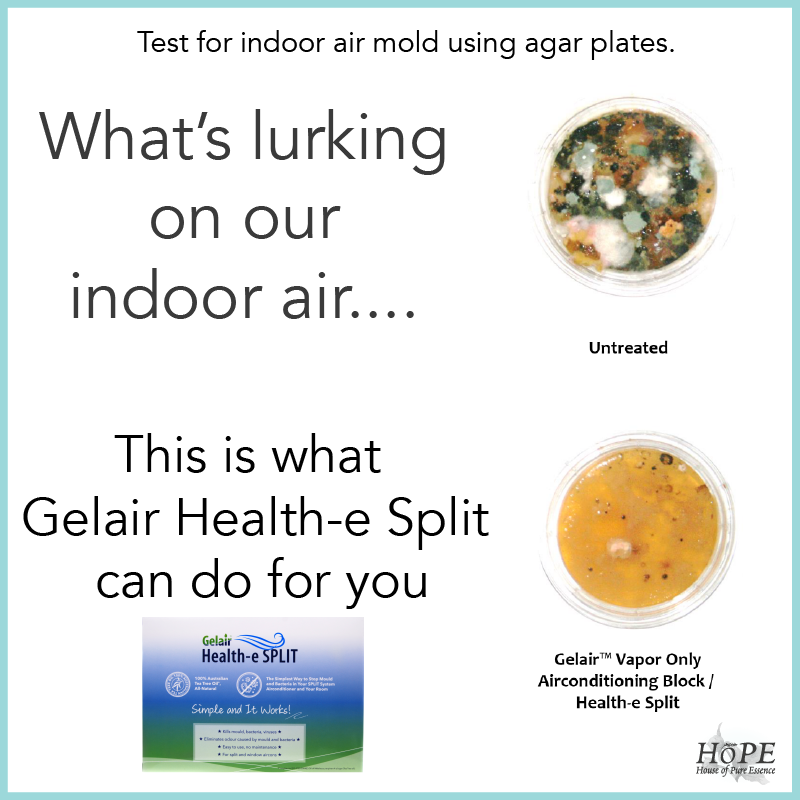 Gelair Health-e Split Mold Plate Indoor Air
