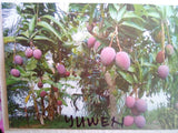 Purple Mango (Yuwen)