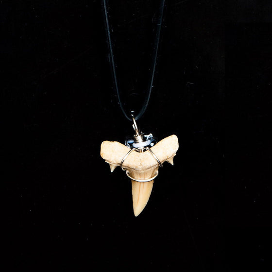 "3/4"" Extinct Sand Shark Necklace"
