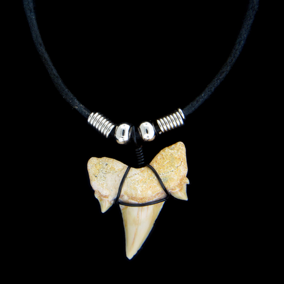 "1 & 1/8"" Extinct Mackerel Shark Necklace"