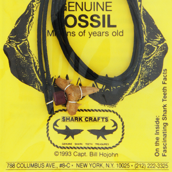 Fossil Necklace With Yellow Card