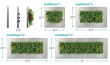 LivePicture IV Living Wall Planter Frame