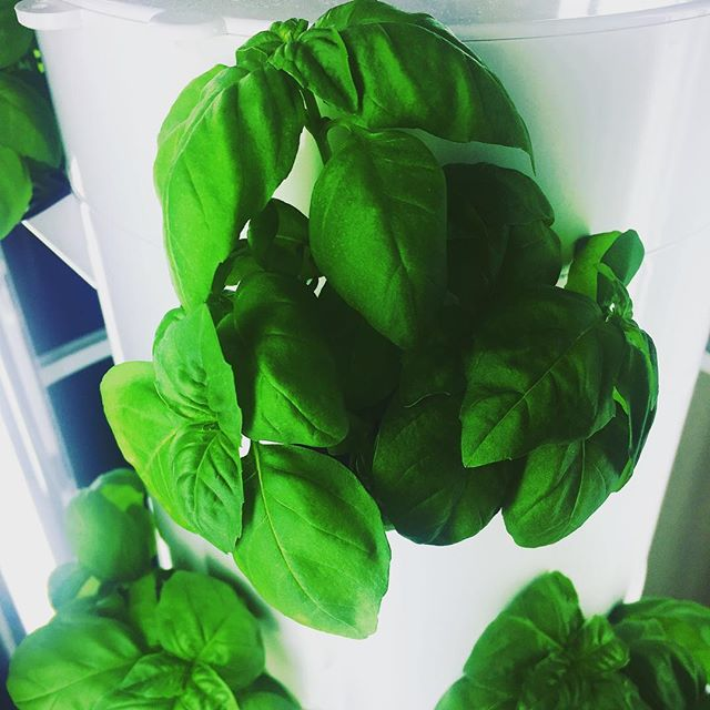 Vertical Growing Tower 20 Pods With Pump, Nutrients