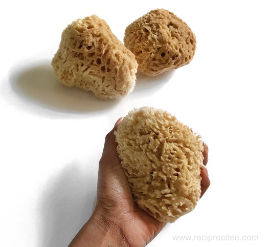 Wool Sea Sponge (body care)