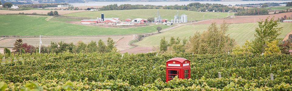 View of vineyards and red English phone booth