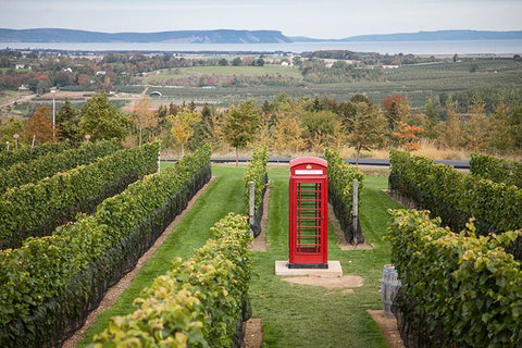 Photo of red british phone box in a field of vines