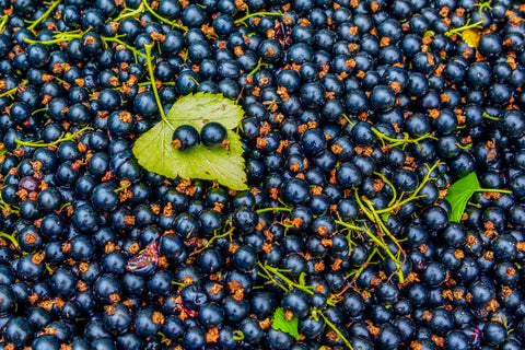 Antioxidant insights, how blackcurrant compounds help 'age-proof' the body