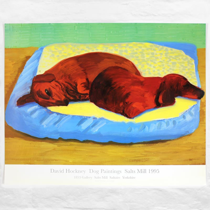 Dog 43 Poster by David Hockney