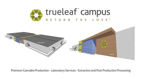true leaf campus