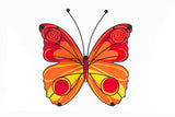 Butterfly Orange And Red