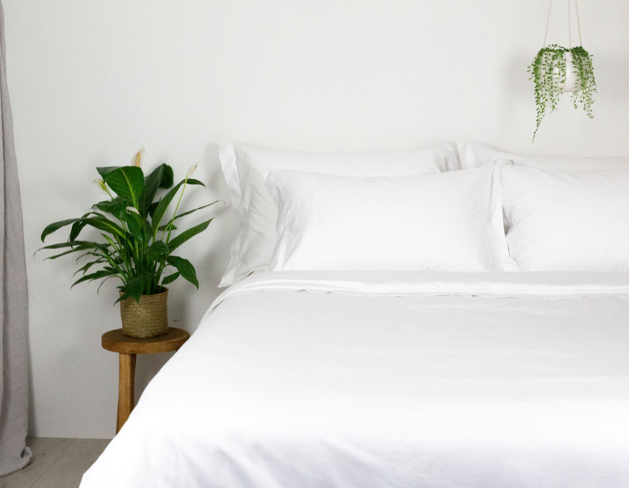 The Best Plants For The Bedroom Scooms