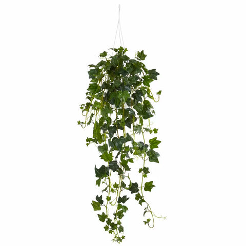 English Ivy Plant | scooms