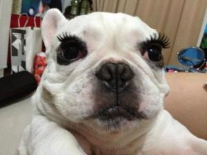 Dog Long Lashes