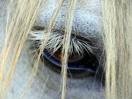 Horse Long Lashes