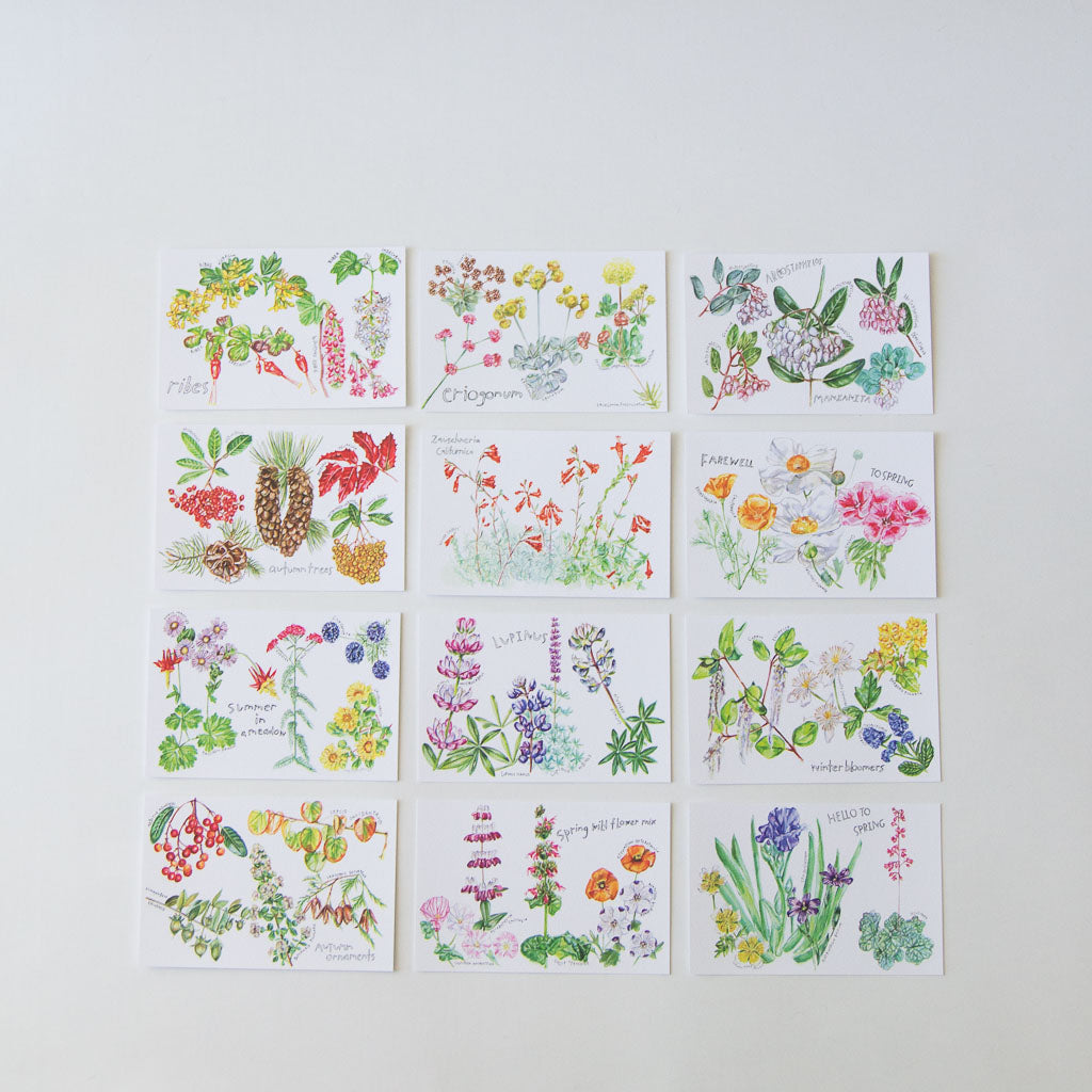 Native Plants Postcard Set