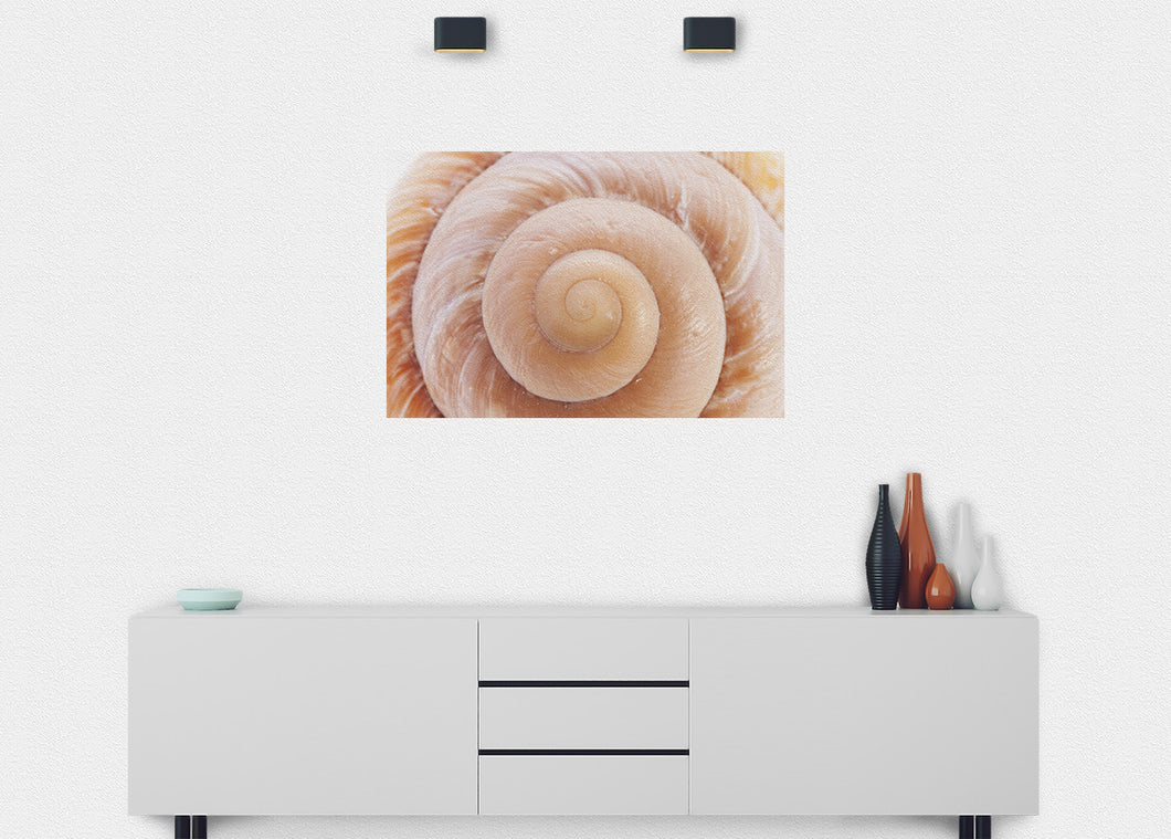 Seashell Wall Mural - Blue Lake Decor