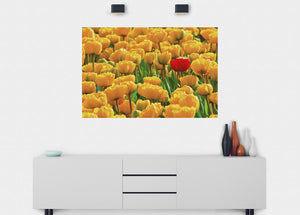 Bright Tulips Wall Mural - Blue Lake Decor