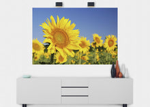 Load image into Gallery viewer, Sunflowers Wall Mural - Blue Lake Decor