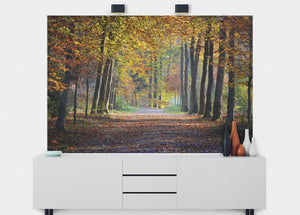Autumn Forest Path Wall Mural - Blue Lake Decor