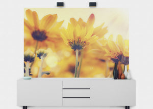 Daisies In Sunlight Wall Mural - Blue Lake Decor