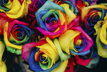Load image into Gallery viewer, Rainbow Roses Wall Mural - Blue Lake Decor