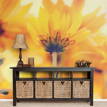 Load image into Gallery viewer, Daisies In Sunlight Wall Mural - Blue Lake Decor