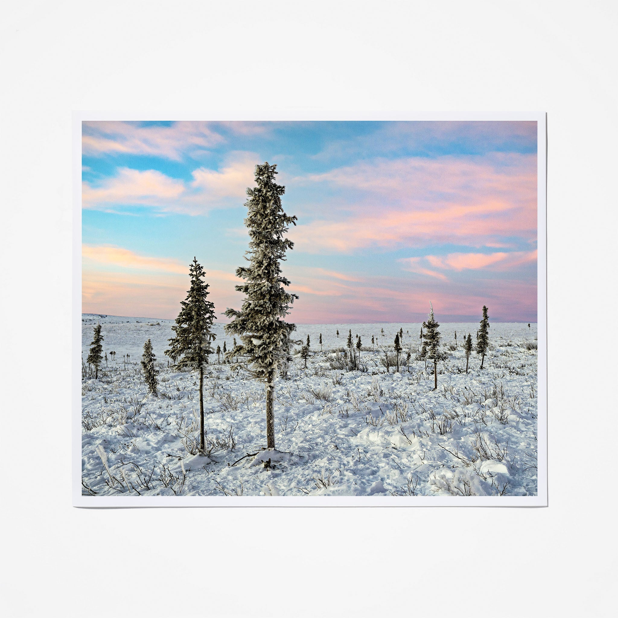 Arctic Boreal Forest