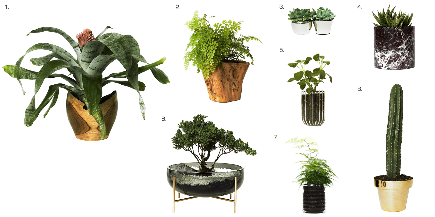 Indoor Gardening: Harness the Hidden Power of House Plants