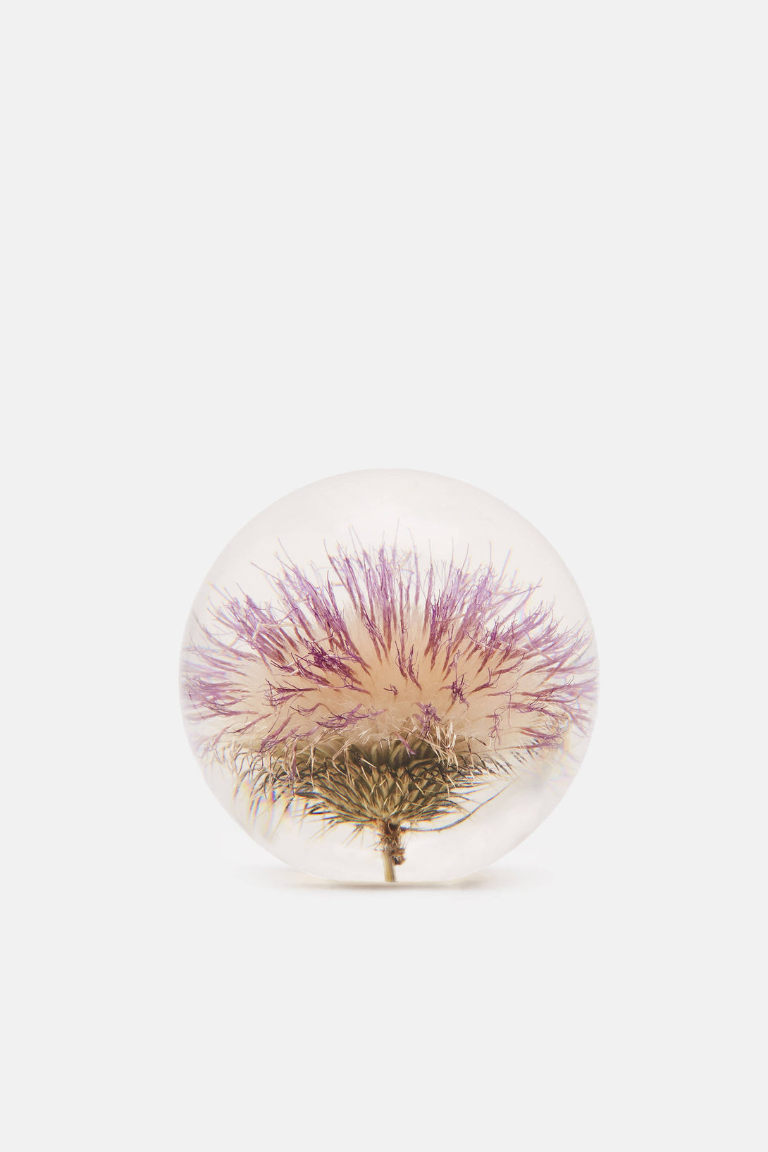 Large Paperweight Open Thistle The Line