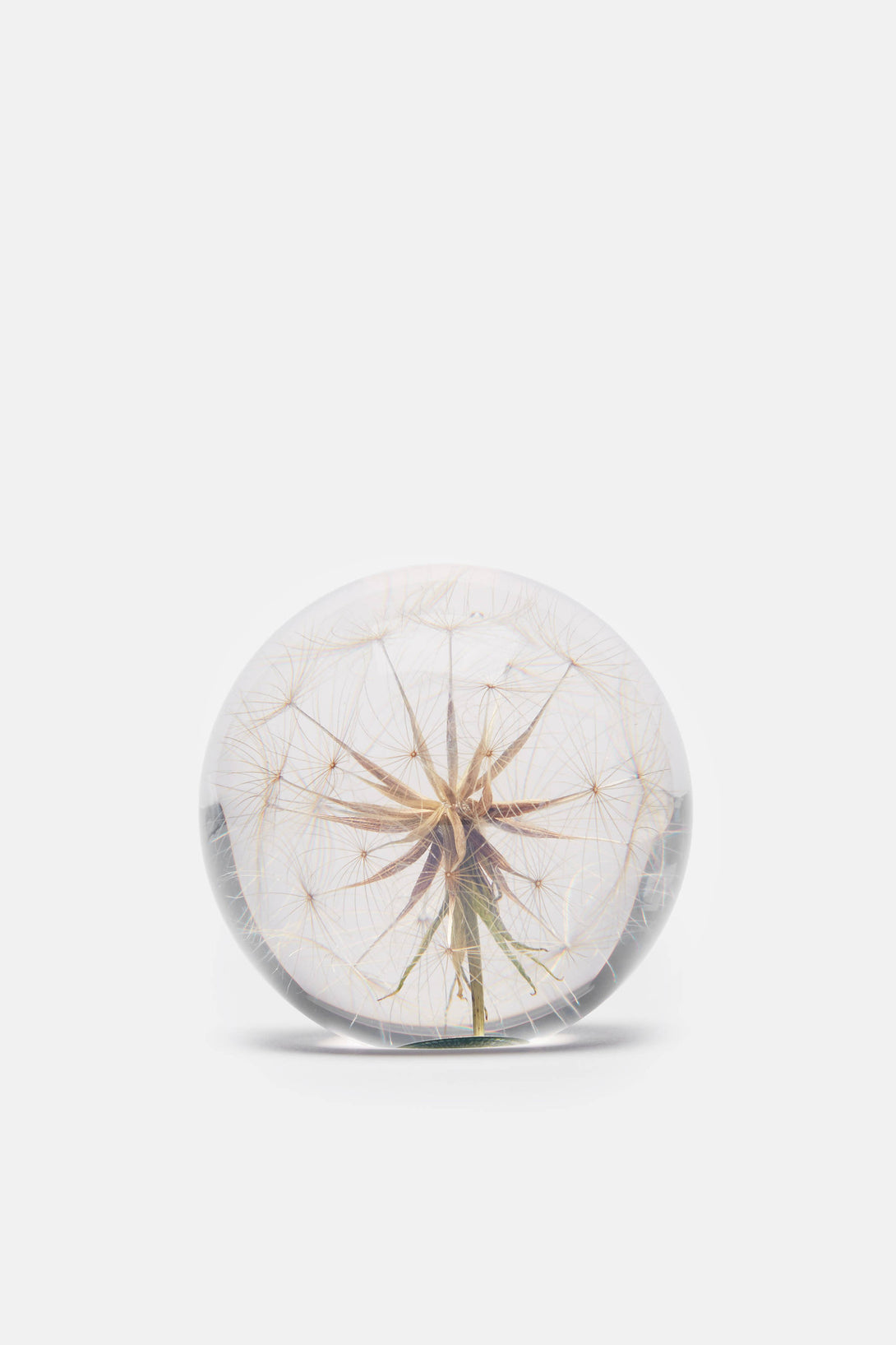 Paperweight - Goat's Beard - Large