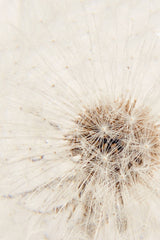 Large Paperweight - Dandelion