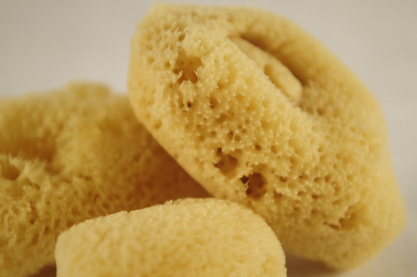close up of small natural facial sponges