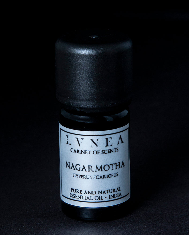 Nagarmotha (Cypriol) - Pure Essential Oil
