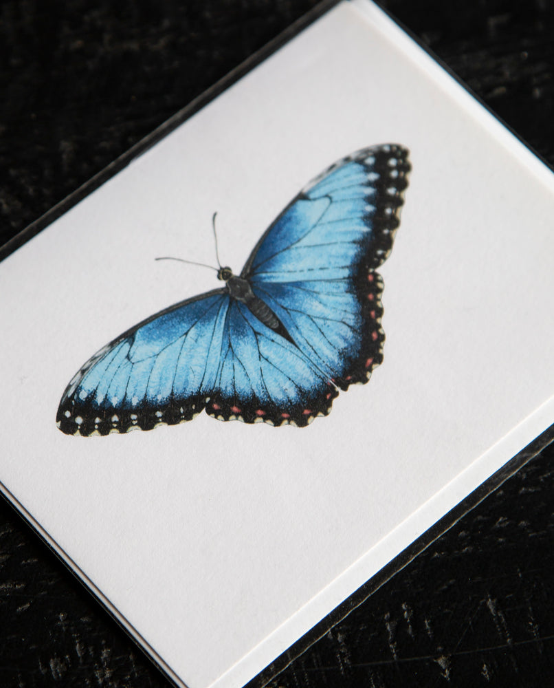 Blue Morpho Greeting Card - Open Sea Designs