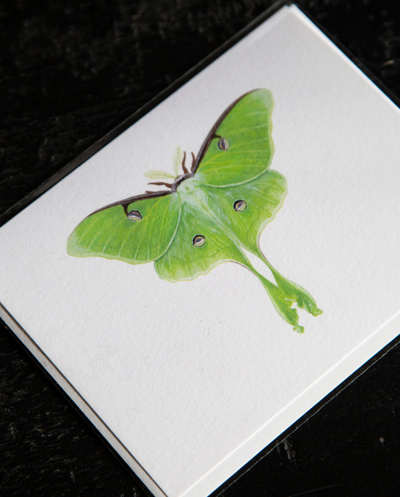 Luna Moth Greeting Card - Open Sea Designs